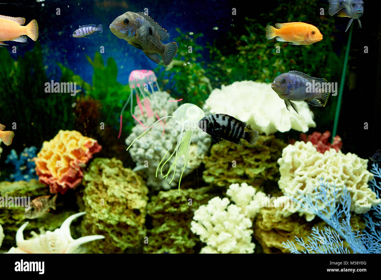 Red sea underwater snorkel stock photos red sea for Dream about fish out of water