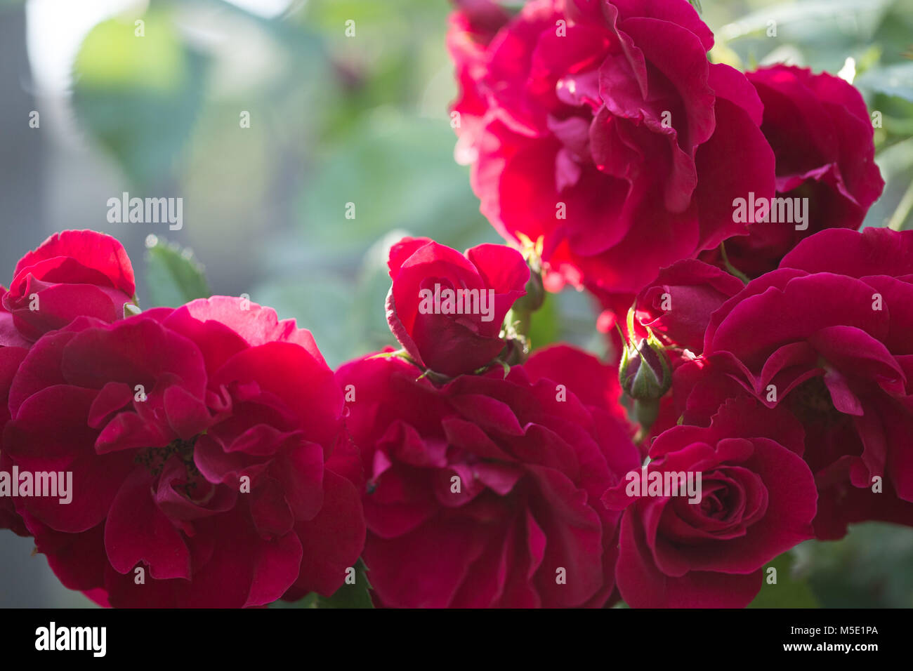 Romance Petal Romantic Valentine Plant Love Beautiful Beauty