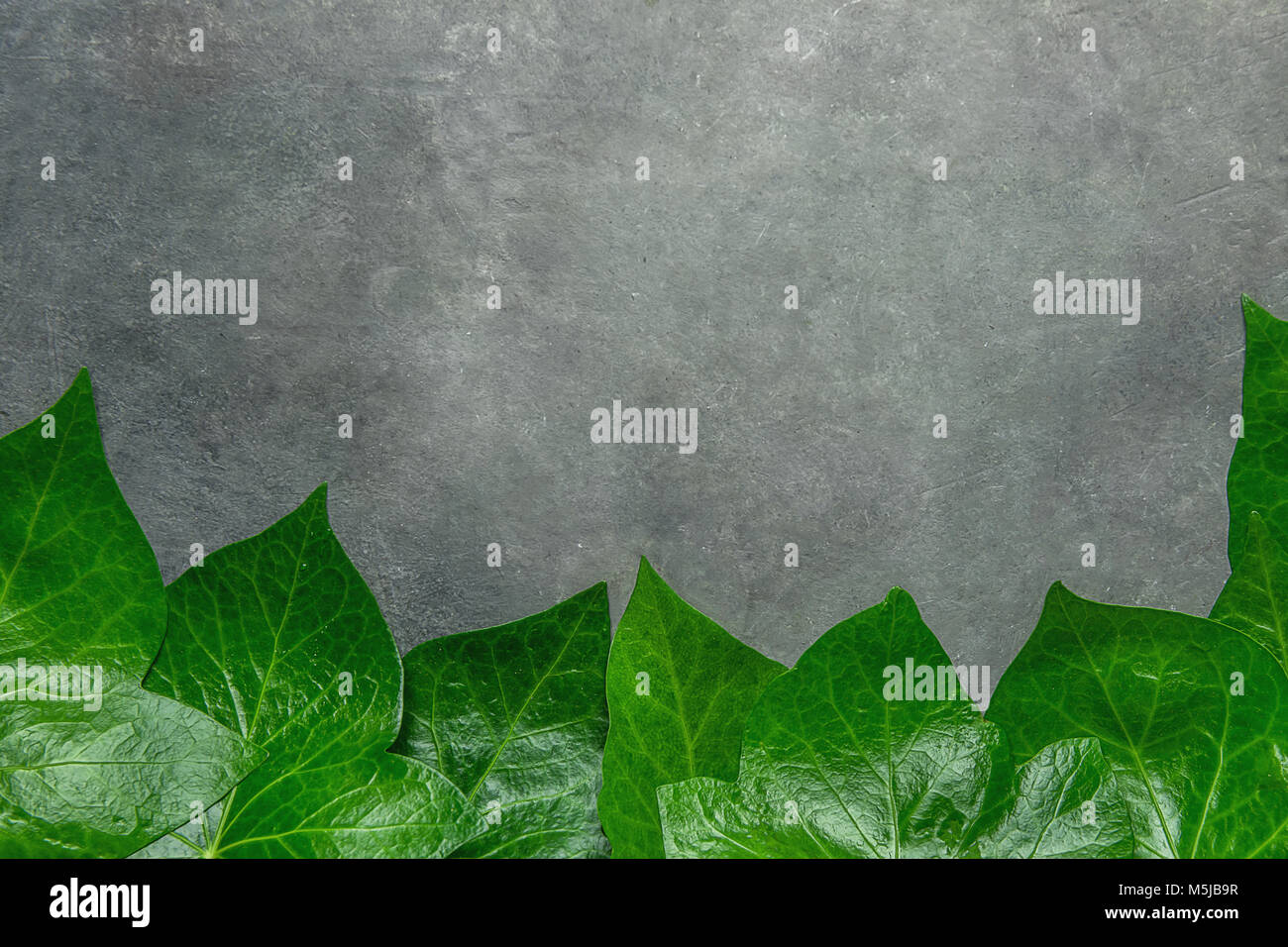 Beautiful Pattern From Fresh Green Ivy Leaves Forming Frame Border On Dark Stone Background Banner Poster Card Announcement Template Botanical Folia