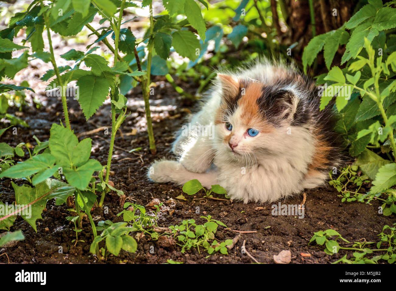 revolution cat flea treatment amazon