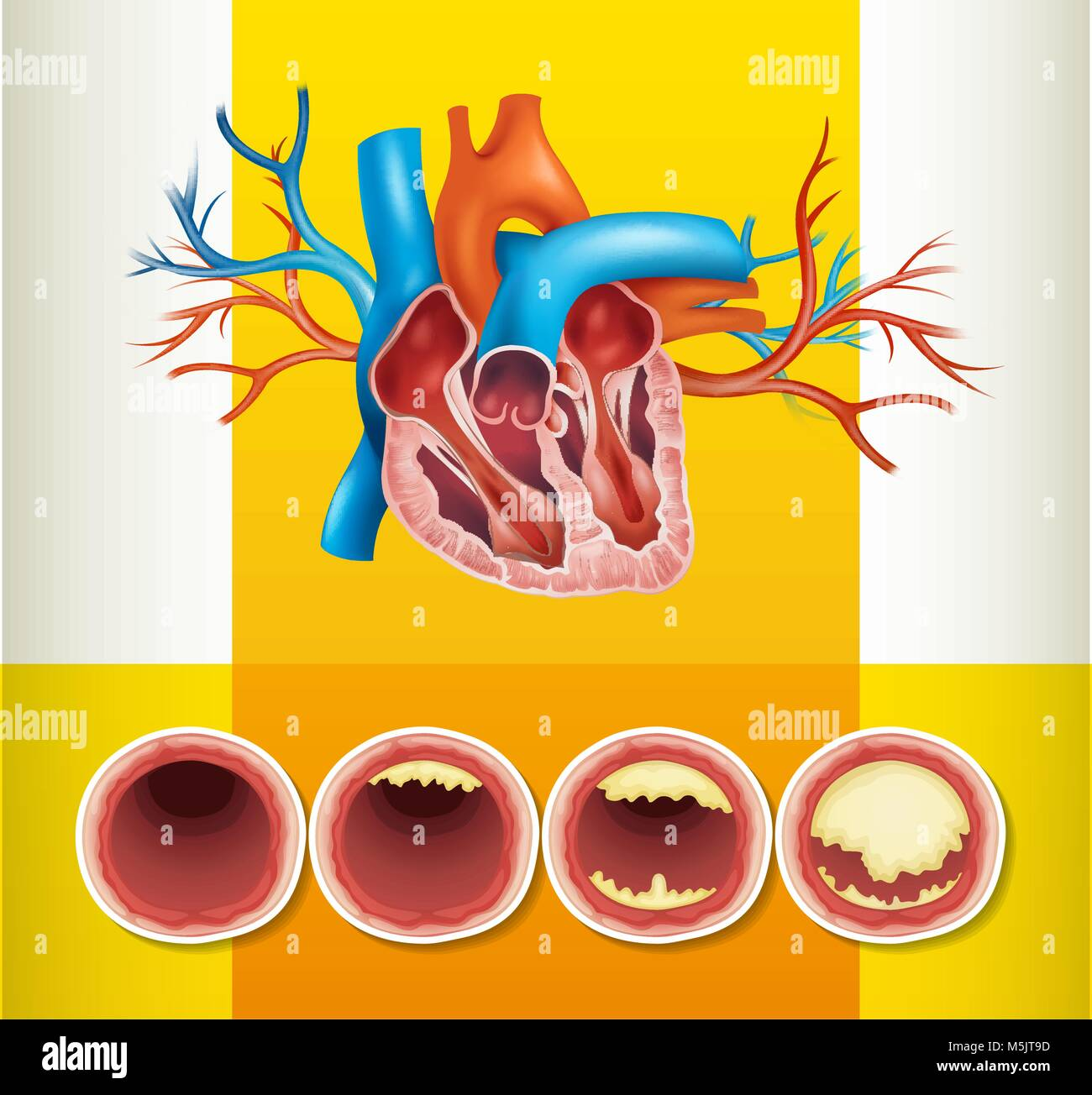 Heart anatomy and fat in vein illustration Stock Vector Art ...