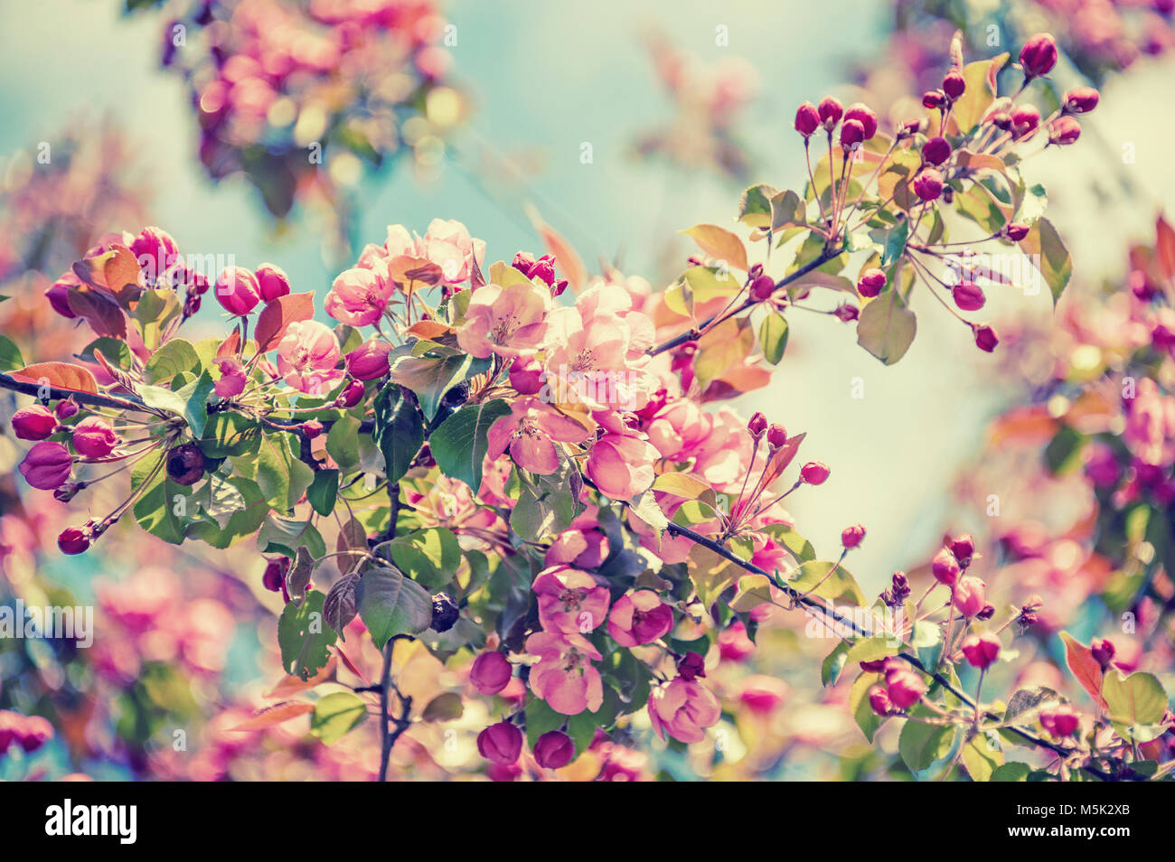 Spring Tree Branch With Small Pink Flowers Background Copy Space