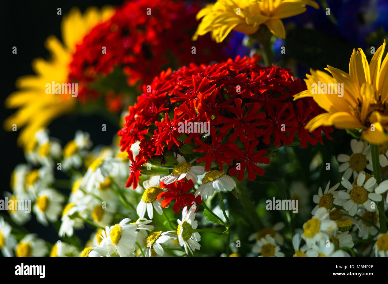 A Colorful Bouquet Of Bright Spring Flowers Of Various Types Stock