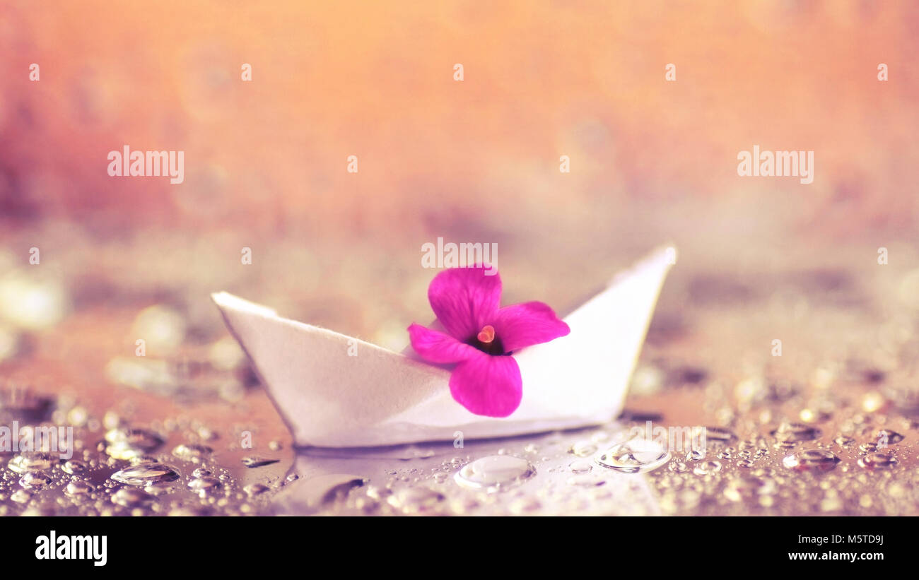 Macro Closeup Of Small Purple Flower In An Origami Paper Boat Stock