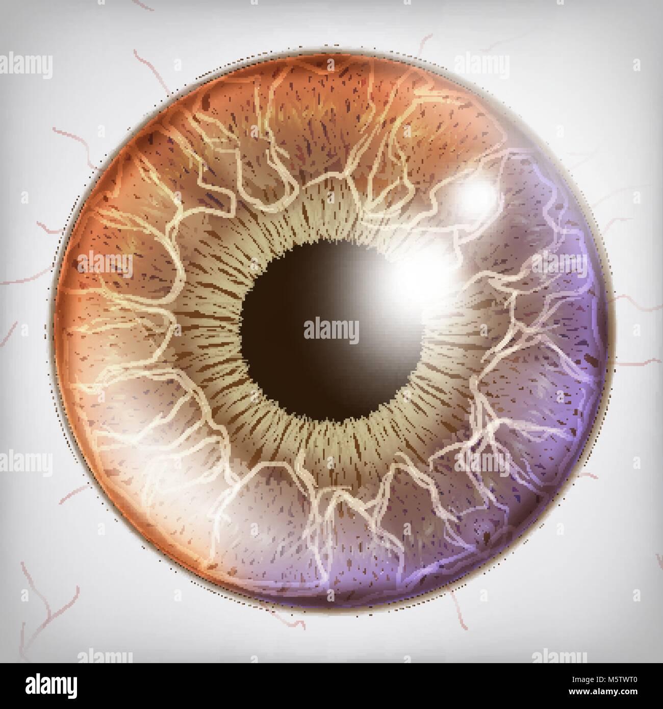 Eye Iris Realistic Vector. Anatomy Concept Illustration Stock Vector ...