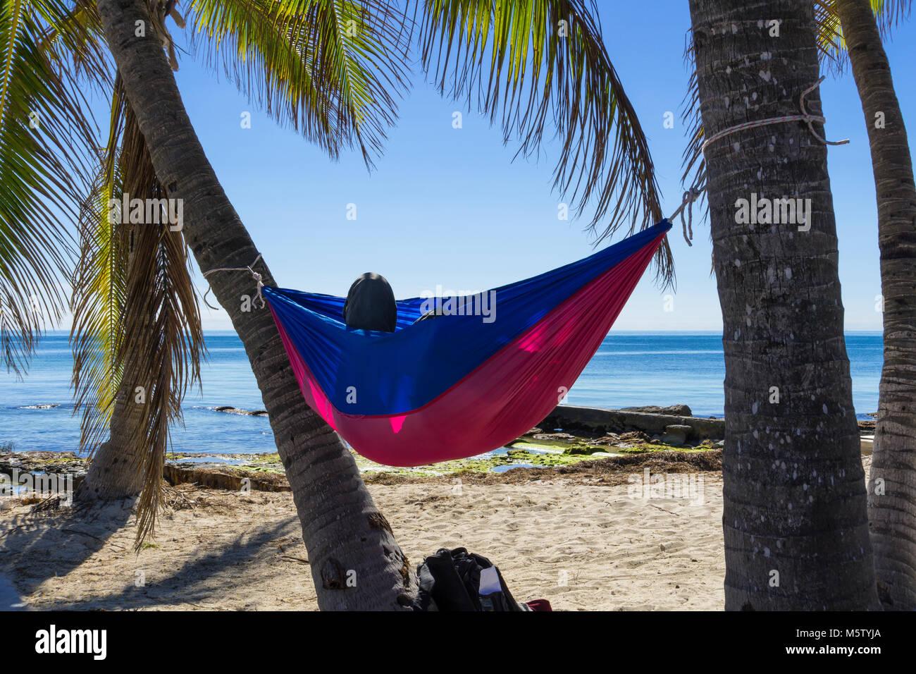 usa florida colorful hammock hanging between palm tree trunks at white sand beach usa florida colorful hammock hanging between palm tree trunks at      rh   alamy