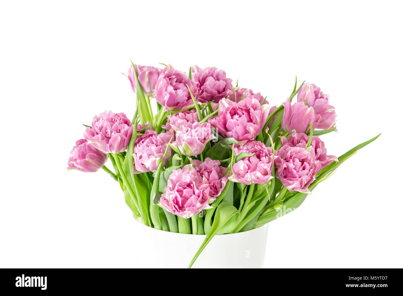 Bouquet Of Pink Tulips In Bucket Fresh Spring Easter Flower White
