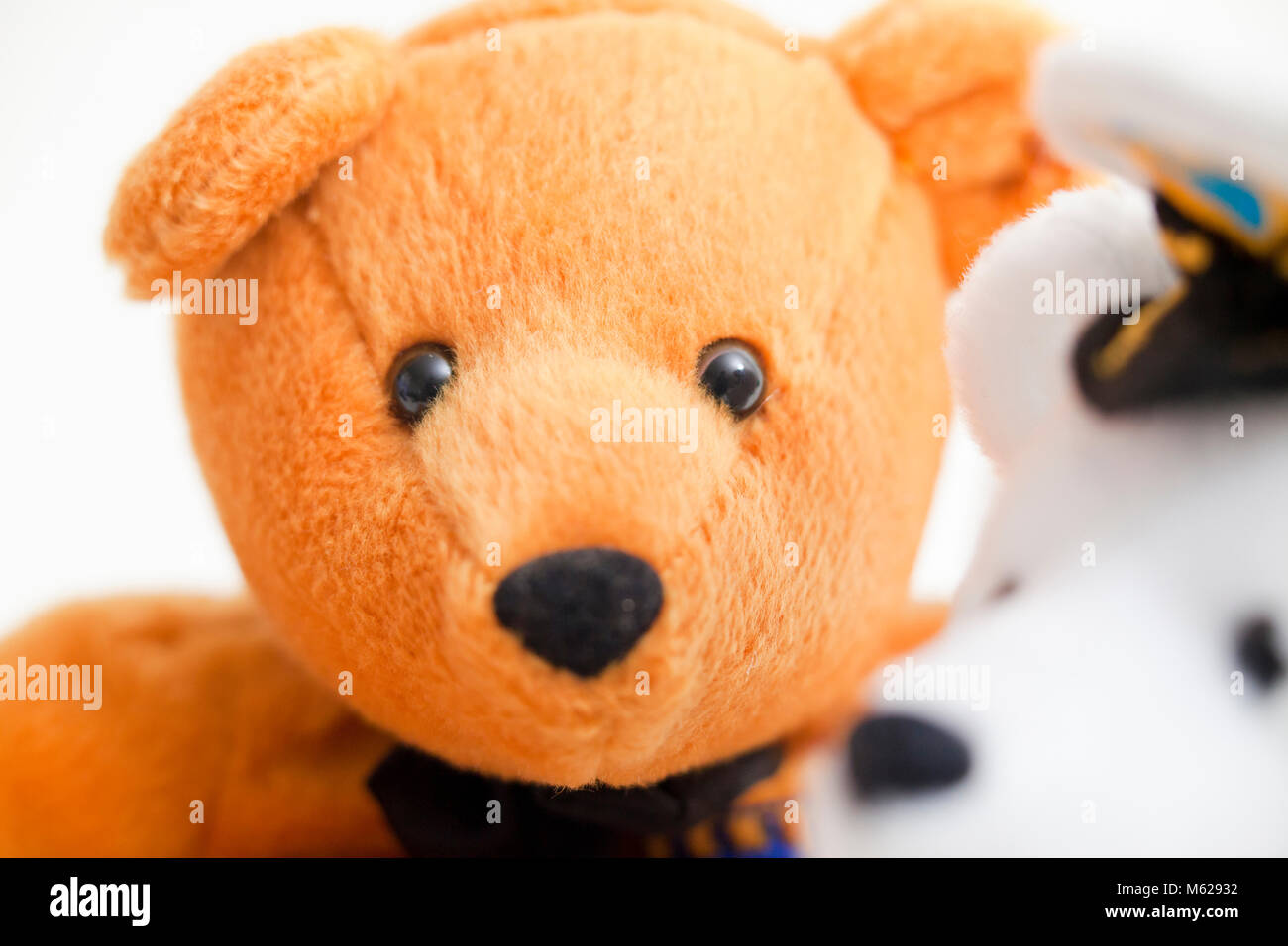 two different colors of teddy bears closeup teddy bear faces stock