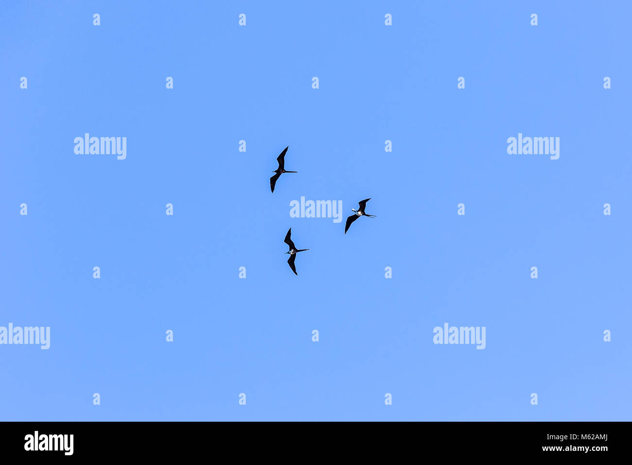 large birds flying in formation against blue sky rio de janeiro