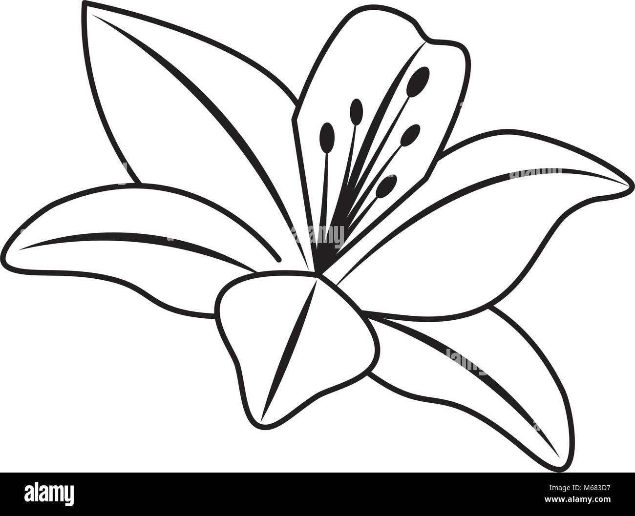 Flower lily delicate decoration floral nature petals vector stock flower lily delicate decoration floral nature petals vector illustration outline desing izmirmasajfo