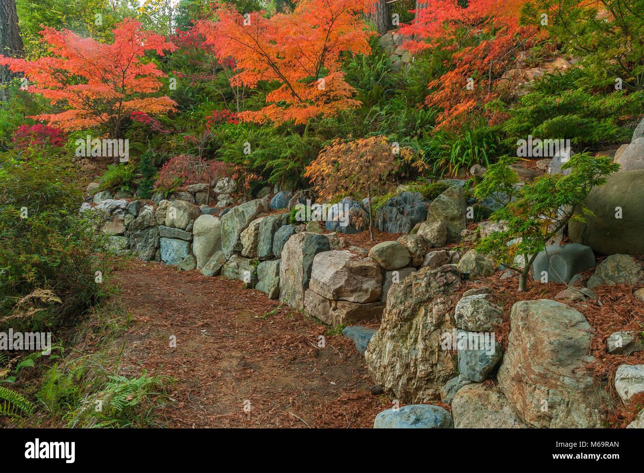Rock Wall, Japanese Maple Garden, Fern Canyon Garden, Mill Valley ...