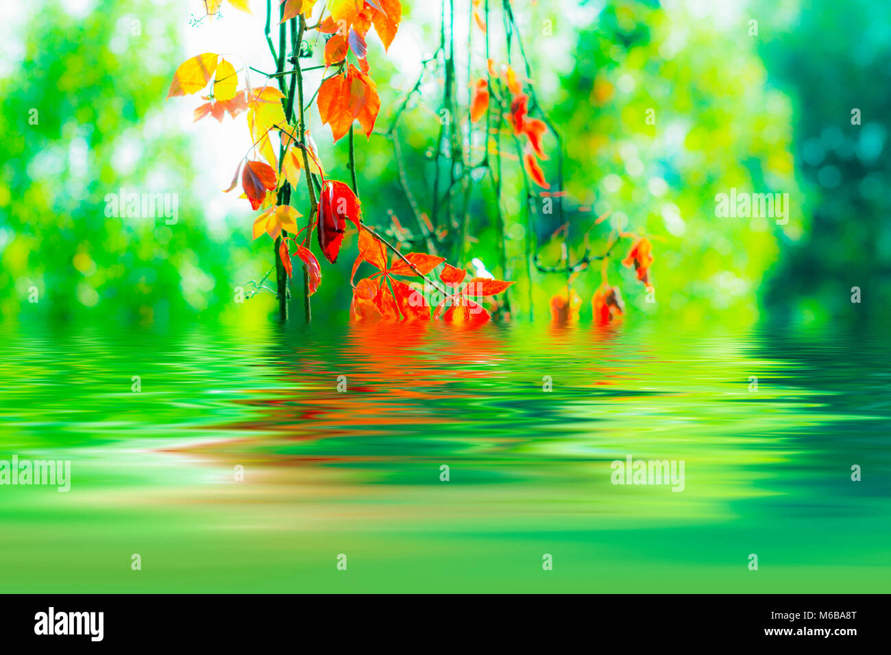 backround with autumn leaves stock photo 176041176 alamy