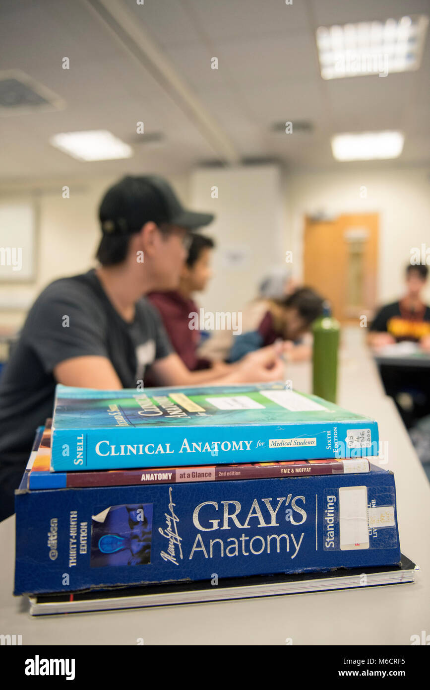 international students learn in a classroom all about the human ...