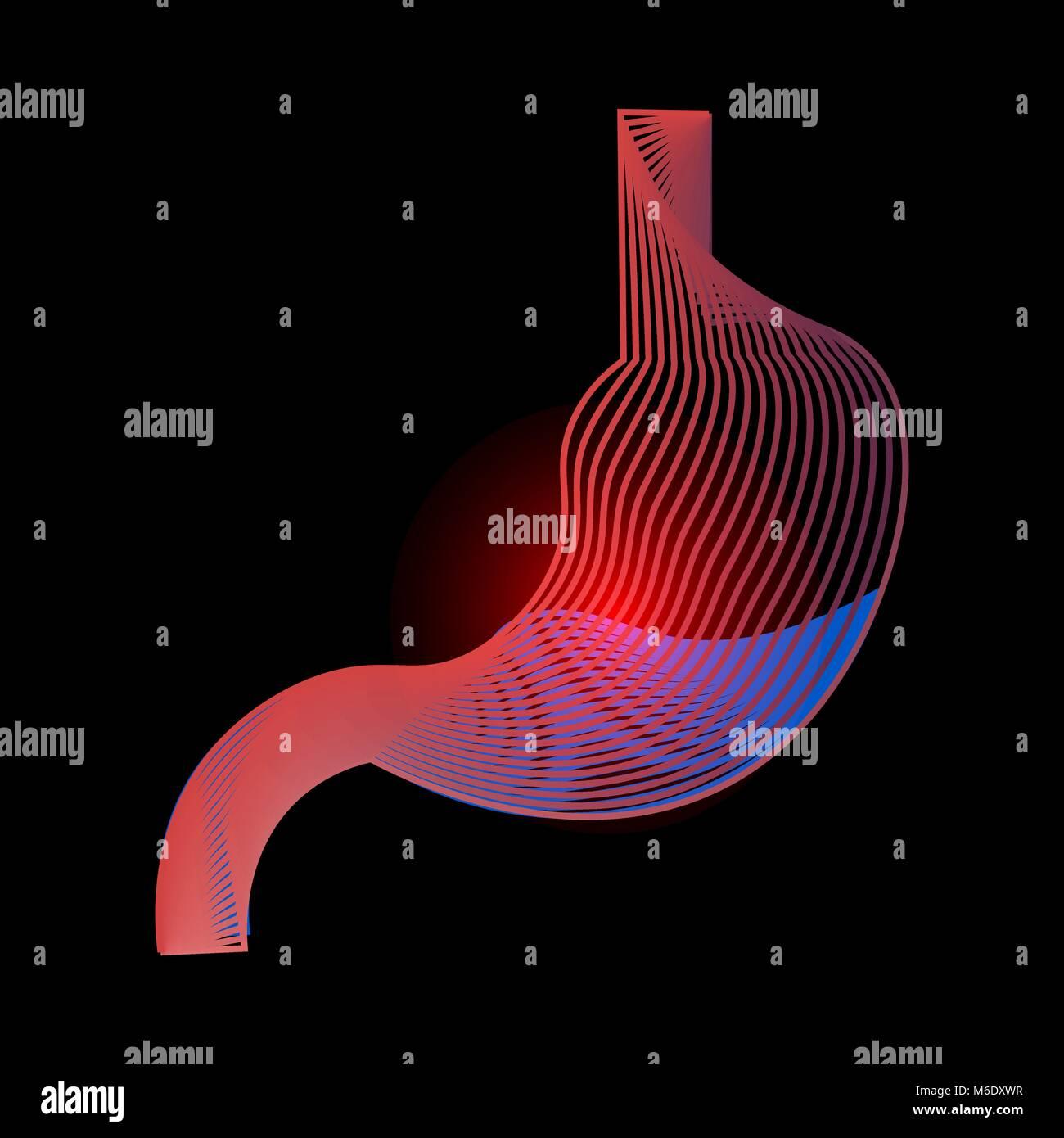 Stomach Icon Human Internal Organs Symbol Digestive System Stock