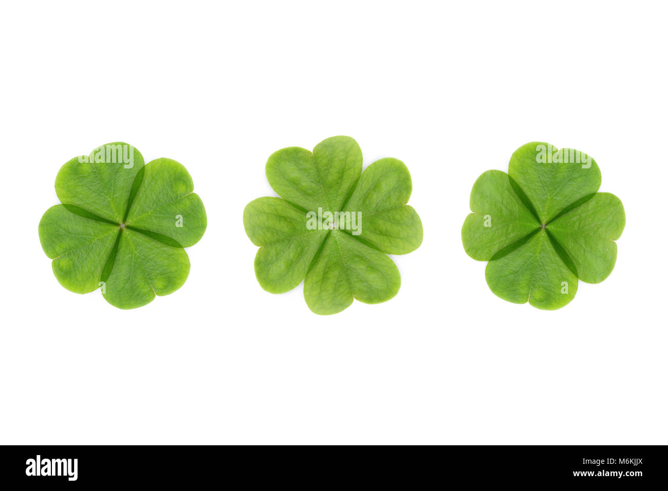Four Leaf Clover Abstract Or Good Luck On White Background