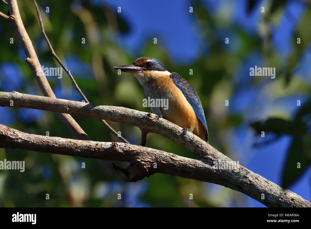 kingfisher catholic single men Video: kingfisher plant explosion 0 share  video: tulsa man sentenced to  life video:  video: man shot and killed by video: locust.