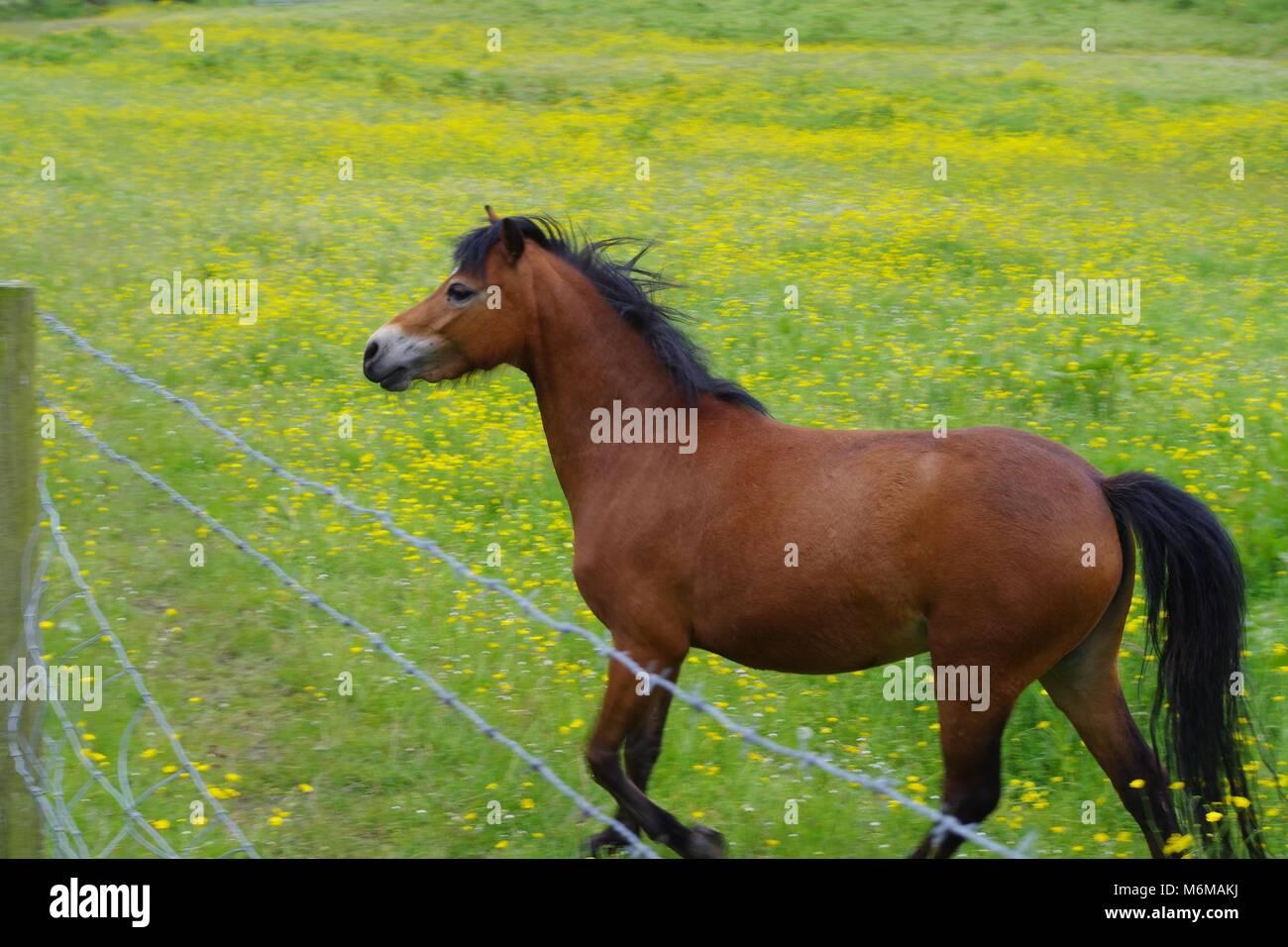 Horse Chestnut Britain Stock Photos & Horse Chestnut ... - photo#21
