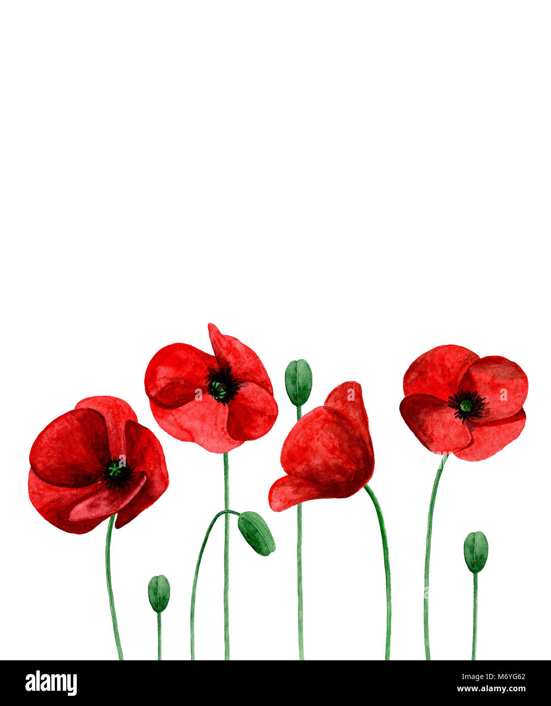 Watercolor poppies red flowers bouquet greeting card design stock watercolor poppies red flowers bouquet greeting card design template m4hsunfo
