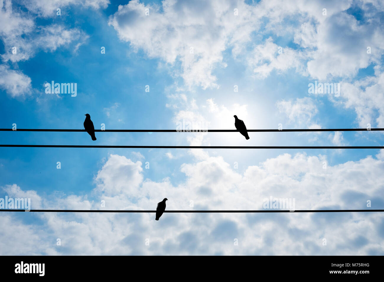 Silhouette three pigeons are resting on electric wire and shiny ...