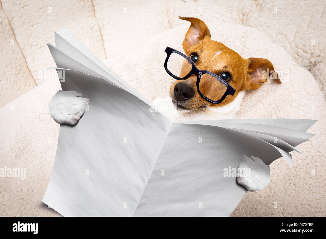 e940b9d9ed cool funny jack russell dog reading a blank empty newspaper or magazine  wearing reading glasses