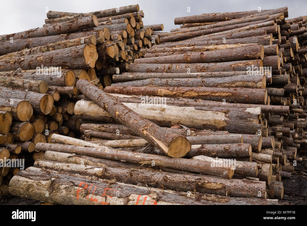 Lumberyard stock photos lumberyard stock images alamy for Pine tree timber