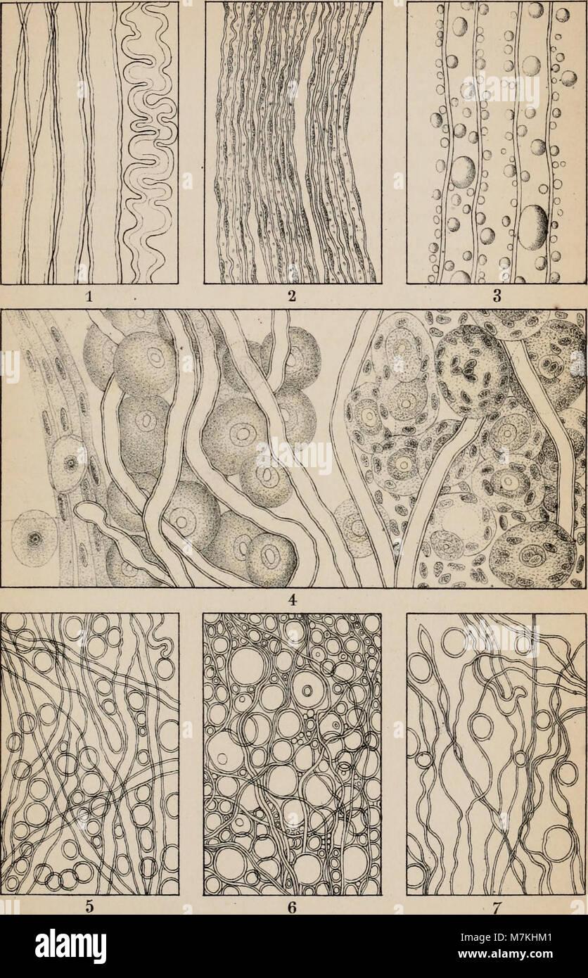 Groß Was Mikroskopische Anatomie Ideen - Menschliche Anatomie Bilder ...