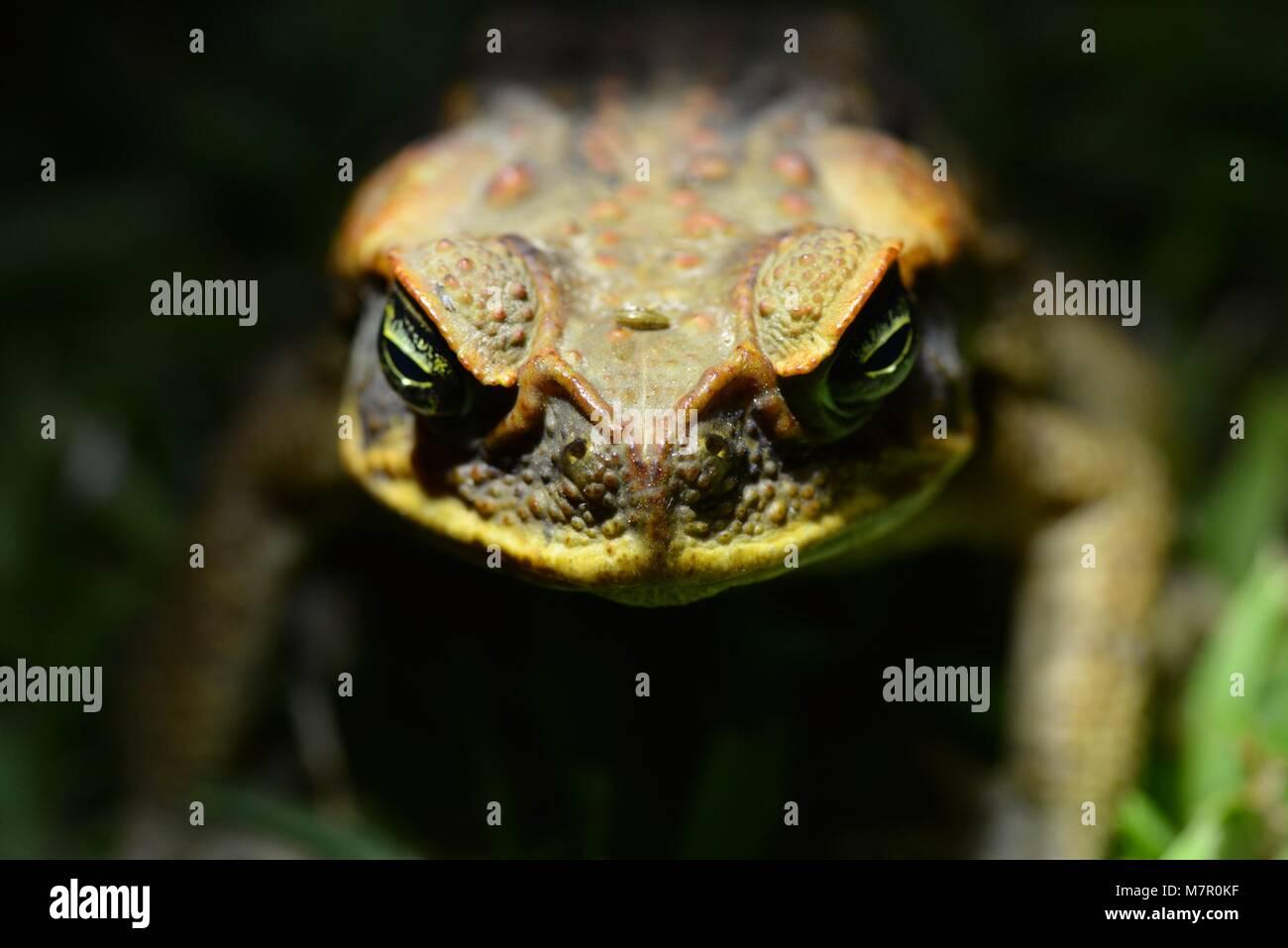 invasive species in australia pdf