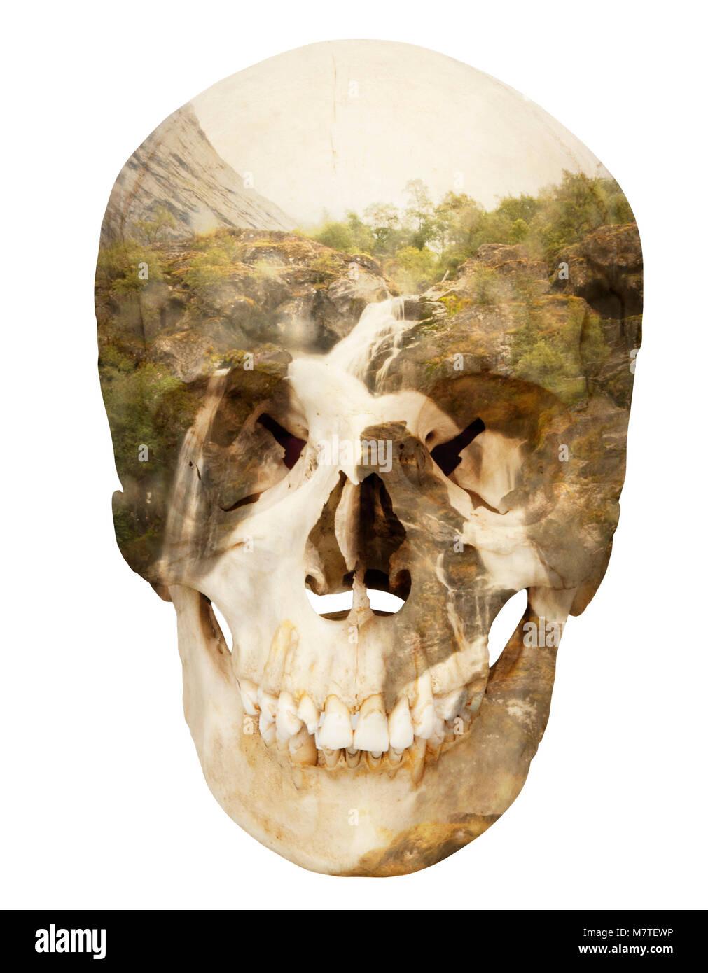 White Teeth Book Cover ~ White teeth book cover stock photos