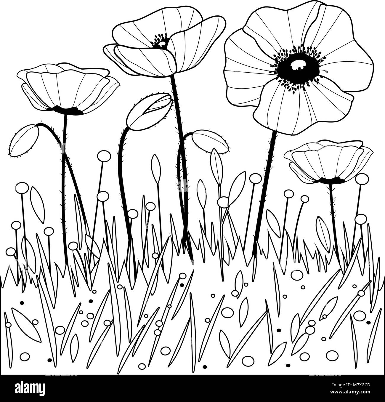 Black And White Poppies Stock Photos Black And White Poppies Stock