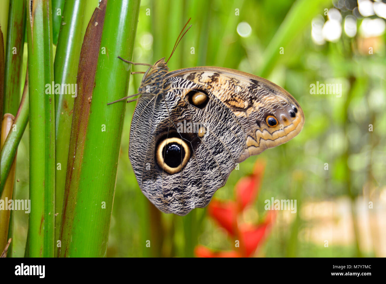 Butterfly as symbol for resurrection stock photos butterfly as butterfly at rest stock image buycottarizona Images