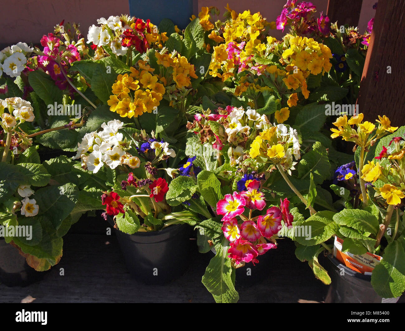 Spring Flowers For Sale At The Home Depot Store California Usa