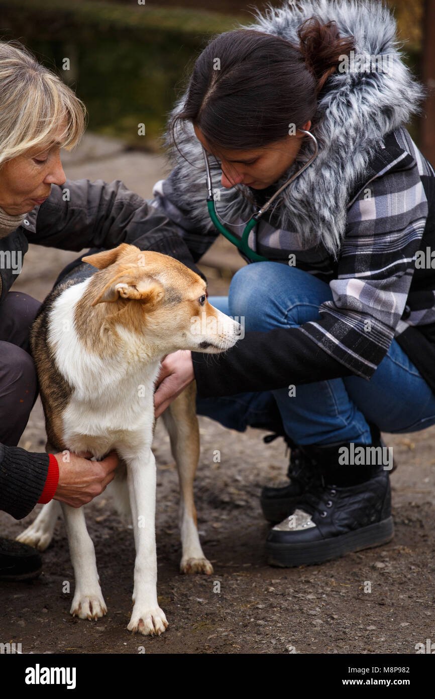 a female veterinarian helps a stray dog. help for homeless animals
