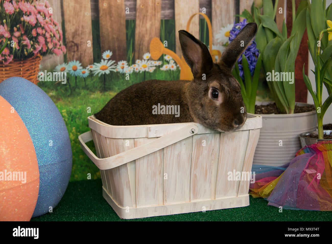 Easter Bunny Rabbit In Basket With Colored Eggs And Blooming Spring