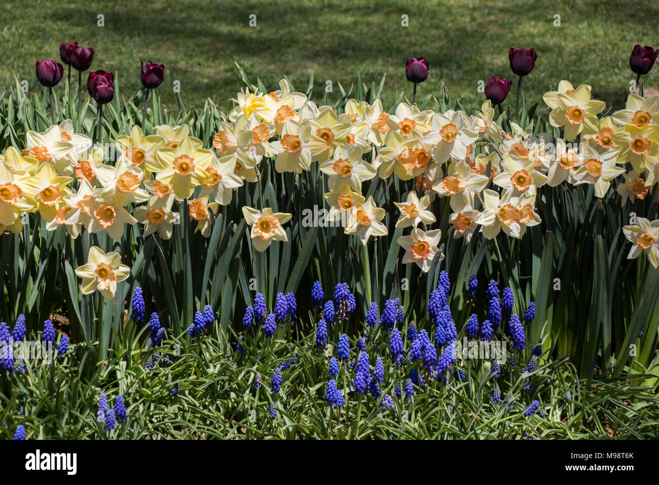 Beautiful Fresh Flowers As A Background Stock Photo 177830203 Alamy