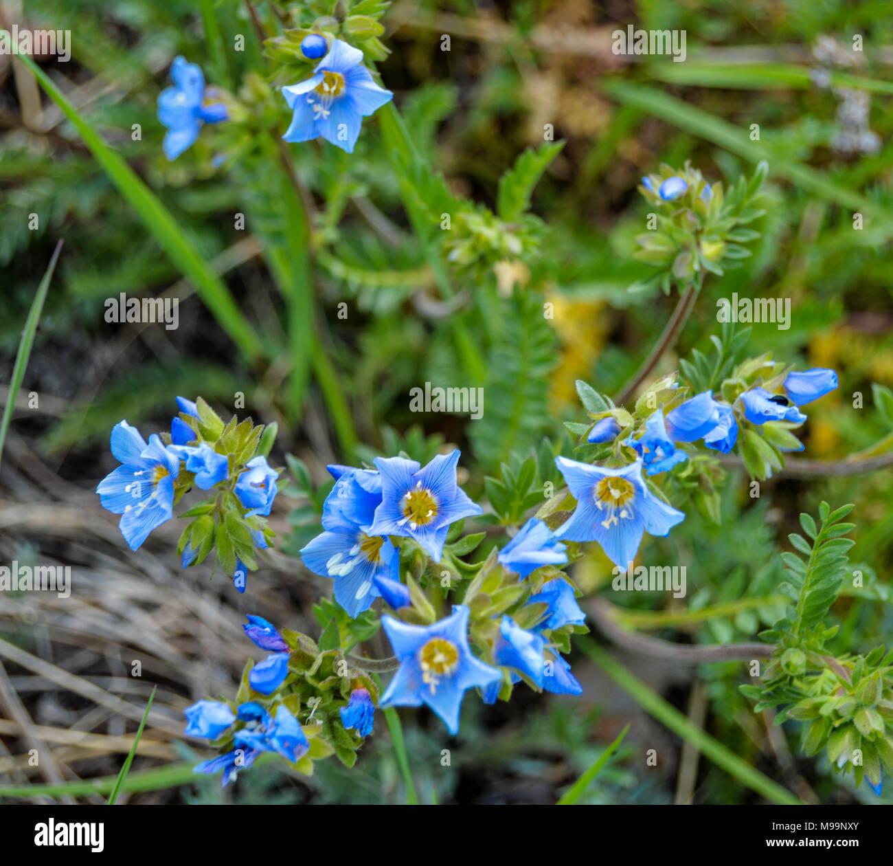 Tiny Blue Flowers Stock Photo 177850371 Alamy