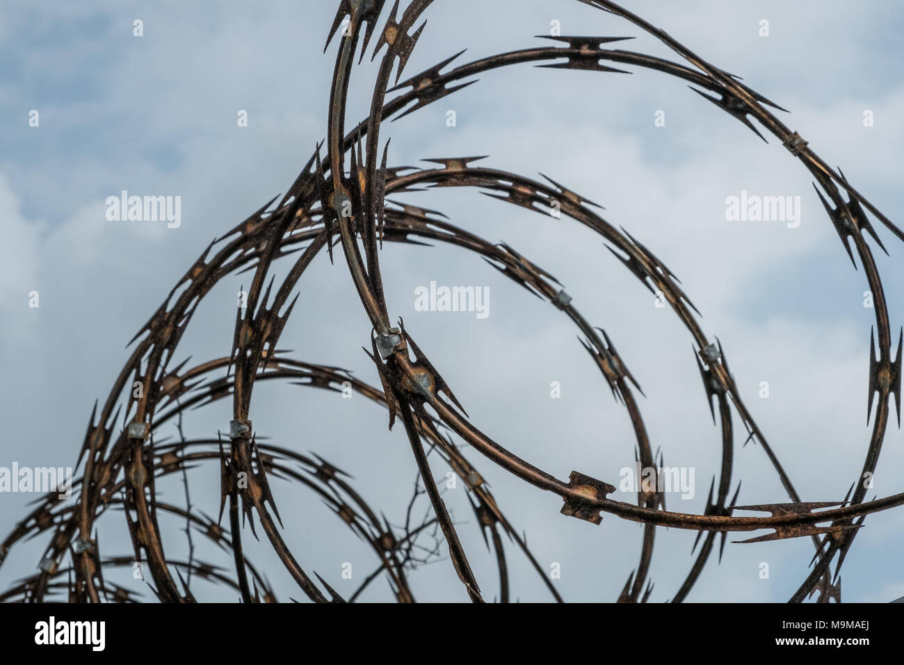 barbwire fence closeup on sky - barb wire fence Stock Photo ...