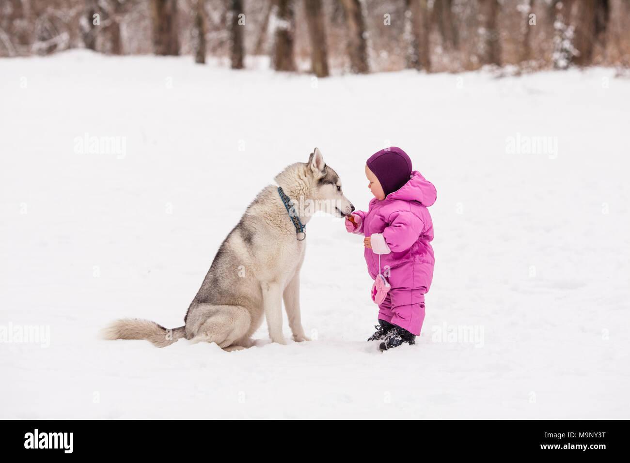 Little Baby With Husky Dog Stock Photo 178117852 Alamy