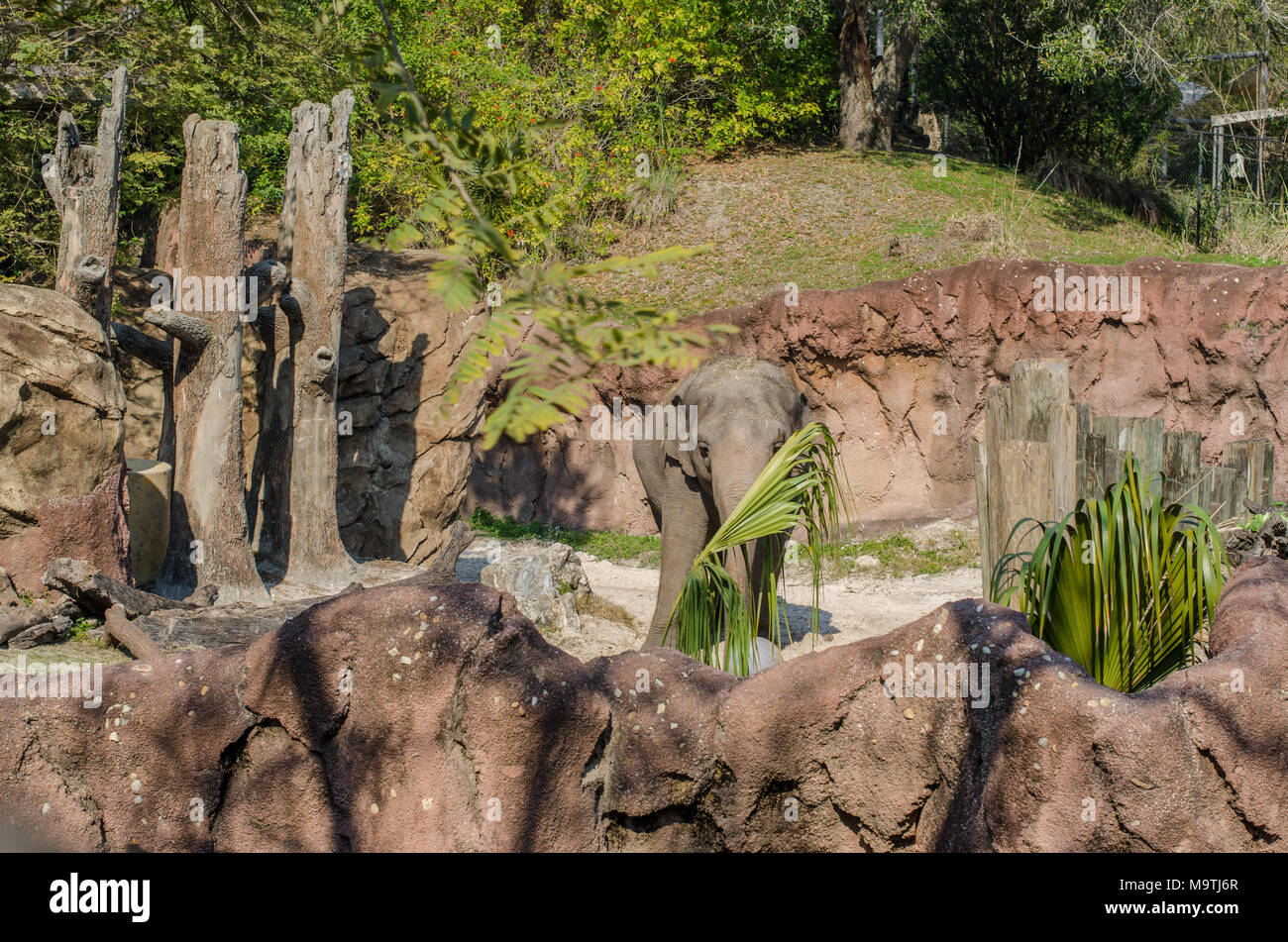 Elephants eating and enjoying the sunshine at Busch Gardens in ...