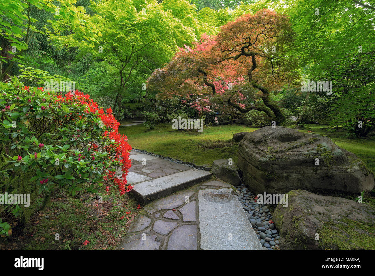 Stone Path With Rocks Maple Trees Plants Shrubs In Japanese Garden During  Spring Season
