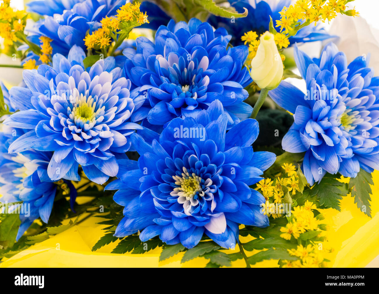 Blue Aster Flowers And Other Species In A Floral Bouquet Stock Photo