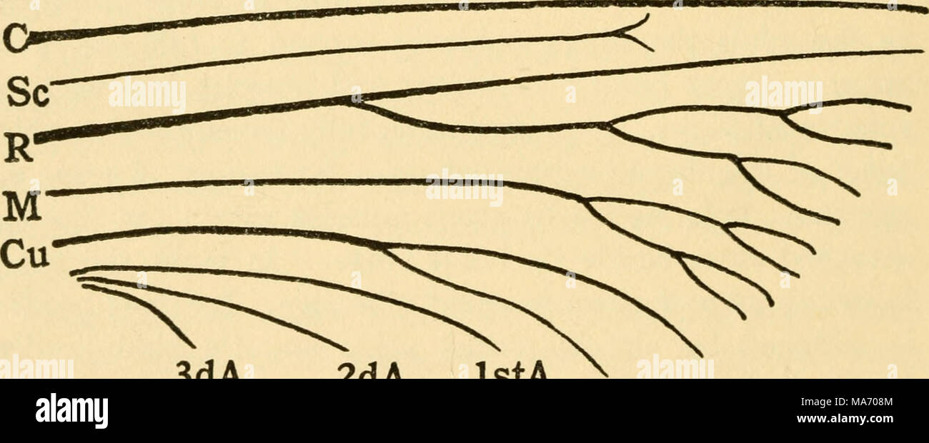 Elementary lessons on insects 3da 2da ista fig 4diagram of the diagram of the principal veins of an insect wing showing their types of branching cross veins omitted the abdomen of the stonefly consists ccuart Choice Image