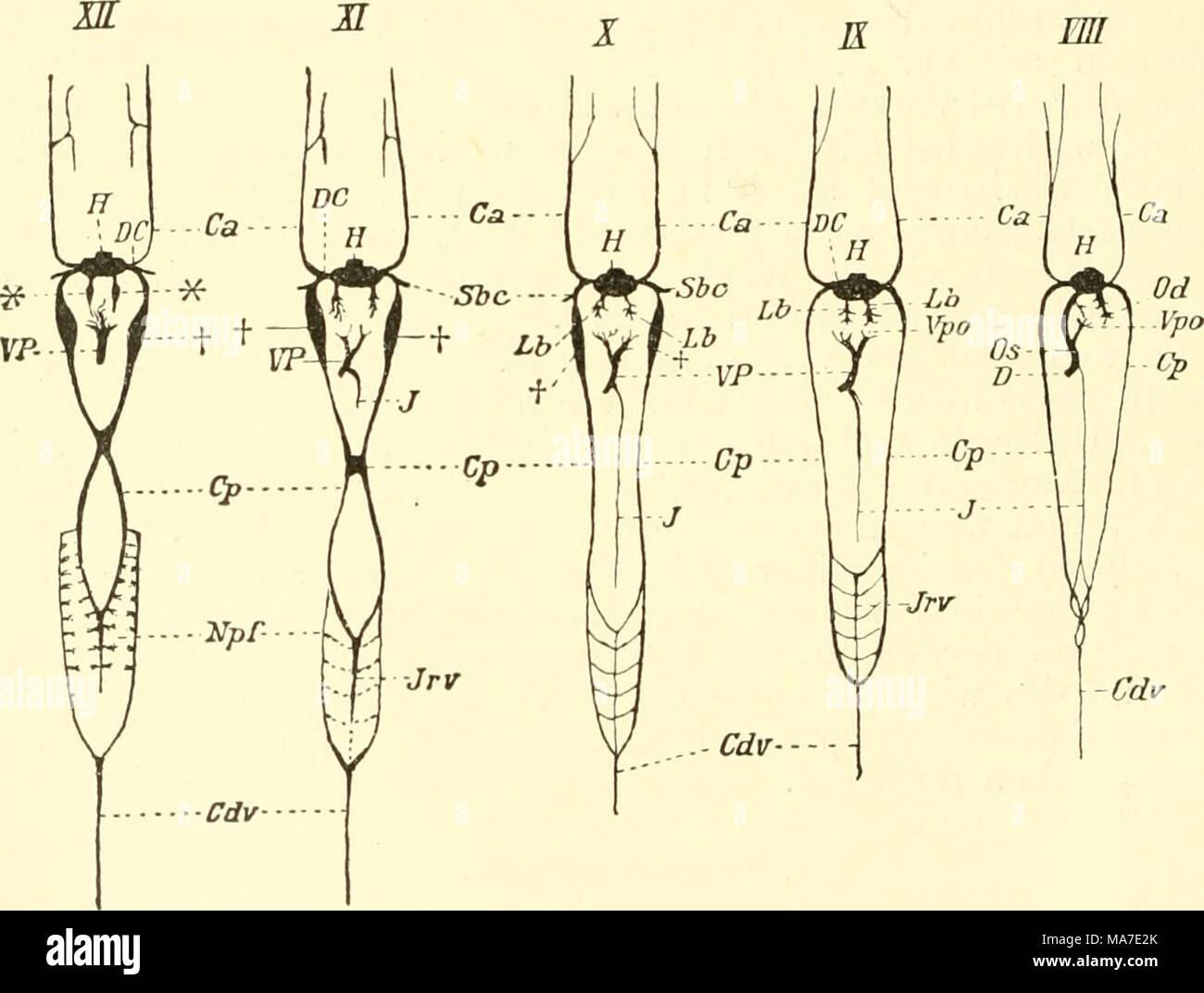 Gemütlich Schafe Anatomie Diagramm Fotos - Anatomie Ideen - finotti.info