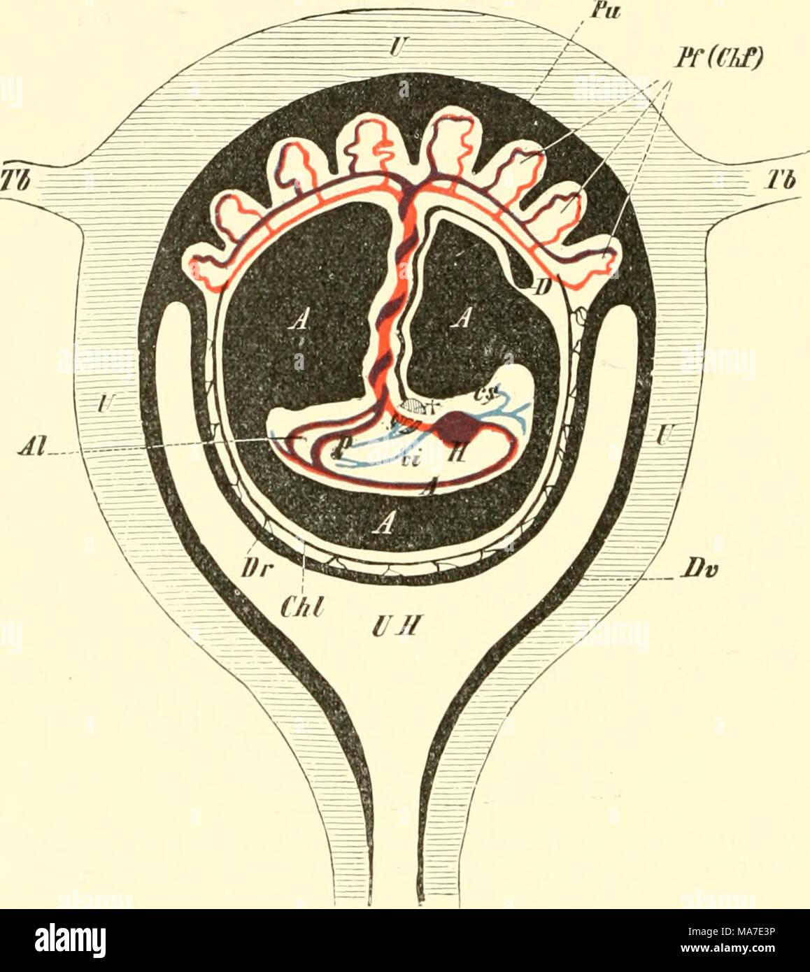 Schön Ovar Und Uterus Fotos - Menschliche Anatomie Bilder ...