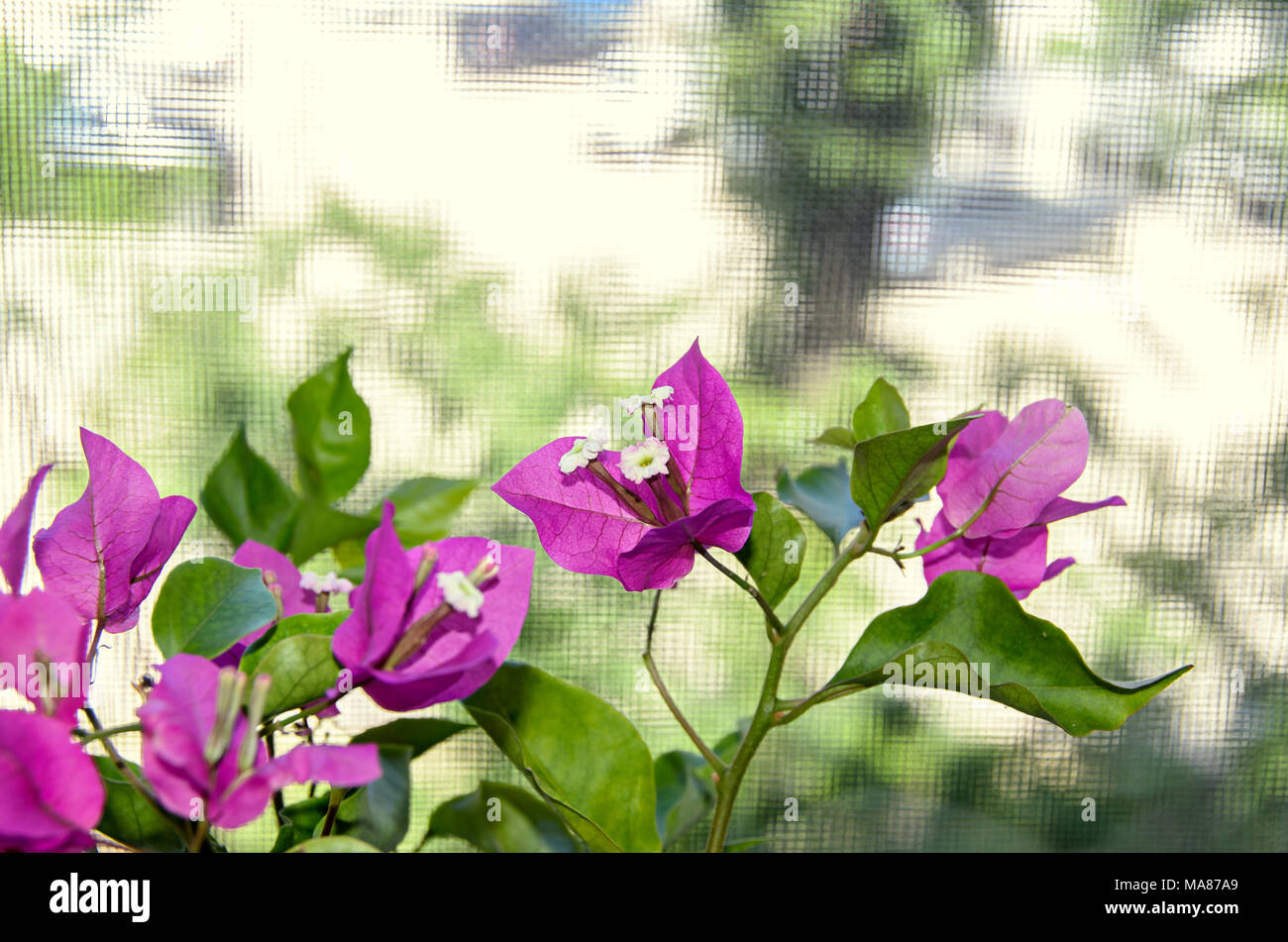 Bougainvillea Pink Ornamental Flowers Paper Flower Branch With