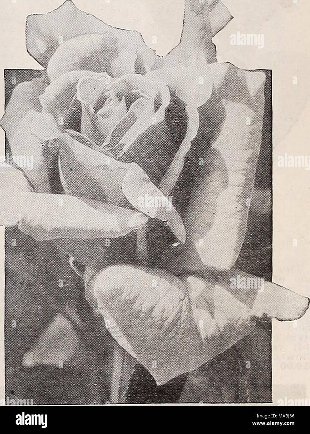 Dreers Wholesale Price List For Florists Bulbs Garden