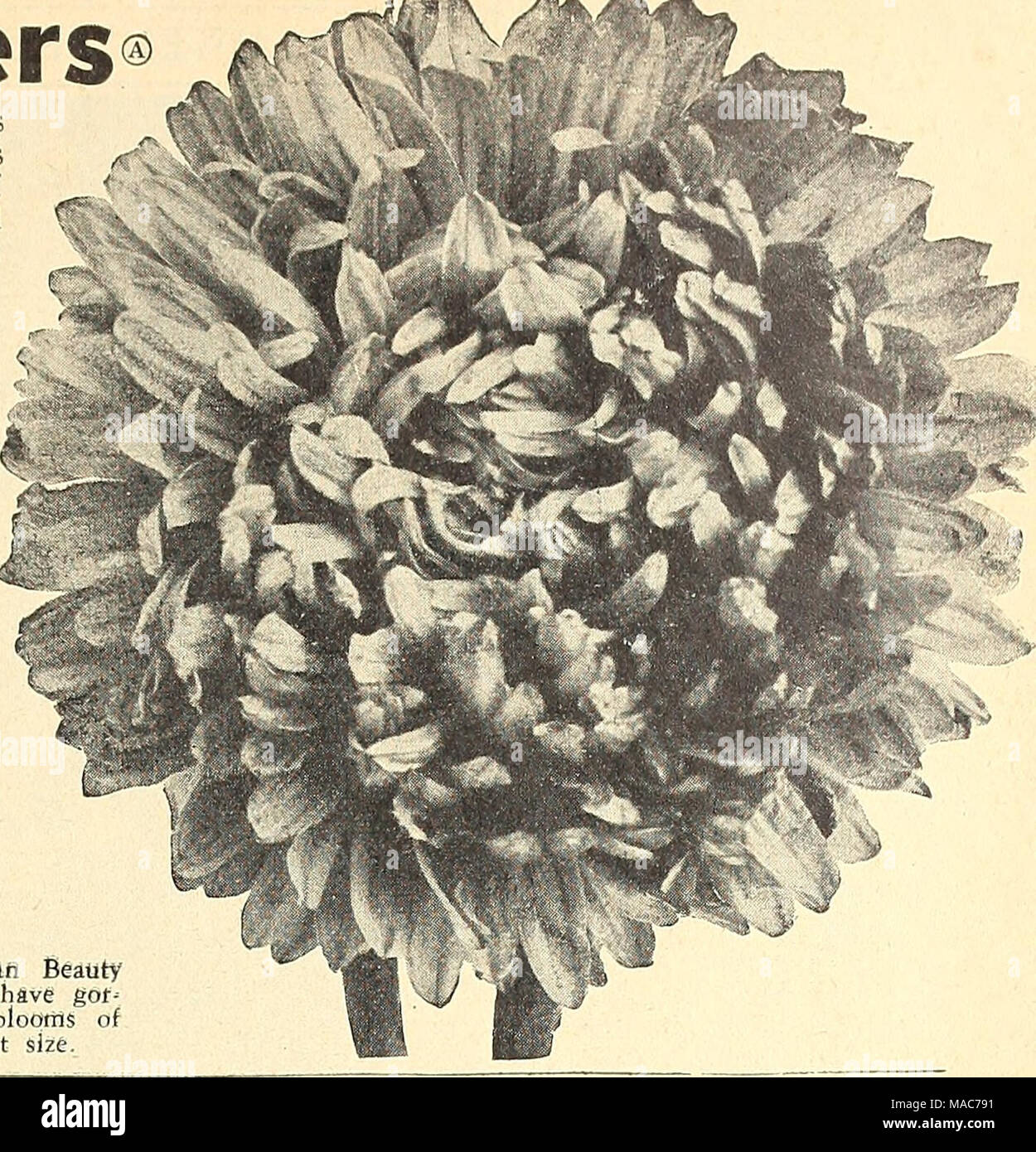 Dreers Novelties And Specialties 1943 For A More Beautiful Flower