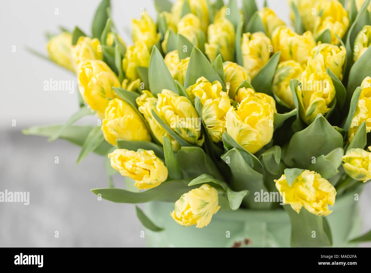 Tulips Of Yellow Color In Green Vase Big Buds Of Multicoloured