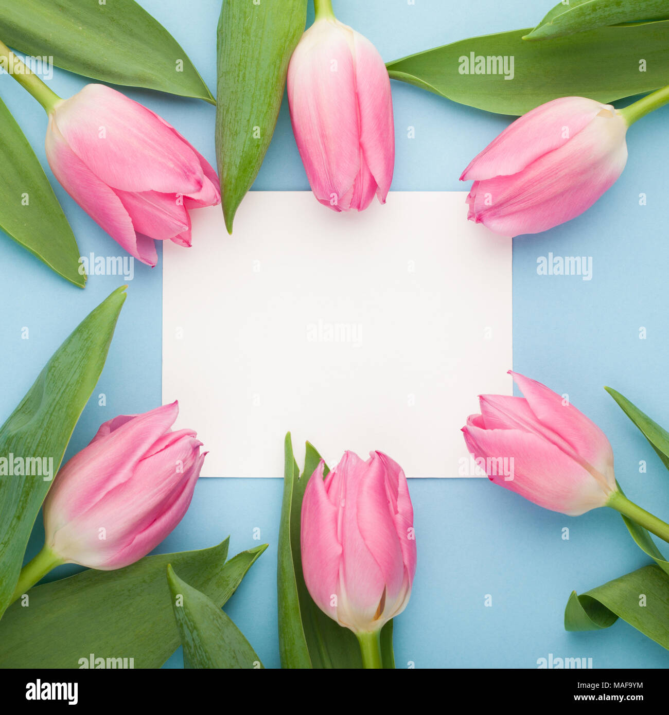 Birthday or wedding mockup with white paper list pink tulip flowers birthday or wedding mockup with white paper list pink tulip flowers on blue background top view beautiful woman day card flat lay stock photo 178587352 mightylinksfo