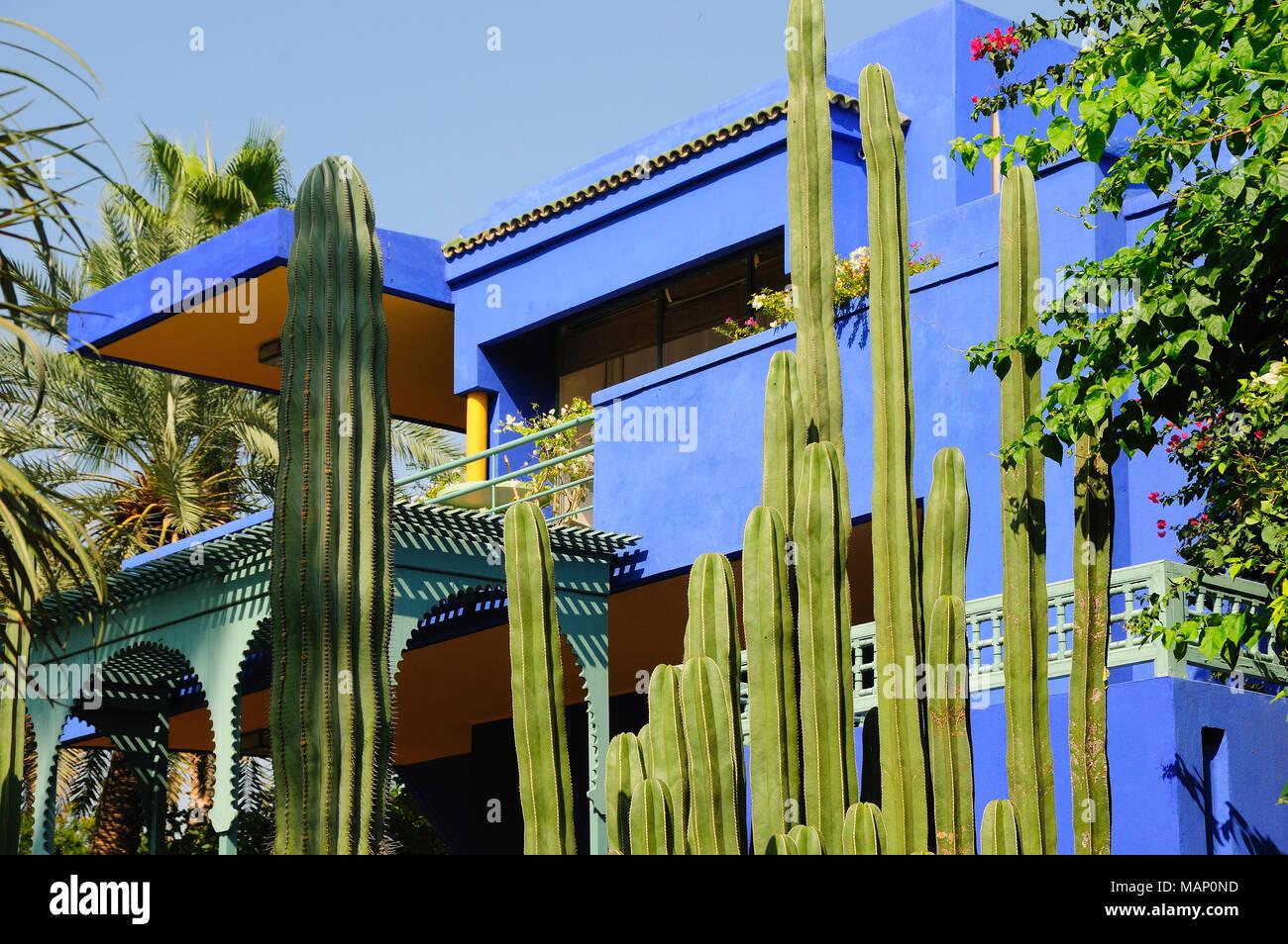 cactus in the majorelle garden marrakech morocco - Majorelle Garden