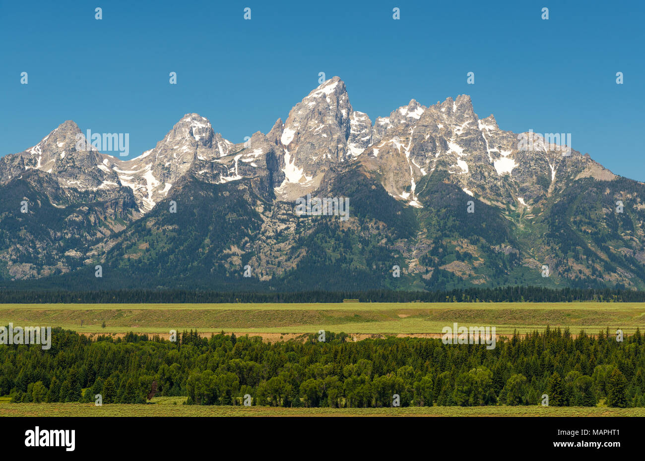The Grand Teton range with a pine forest in the foreground in the ...
